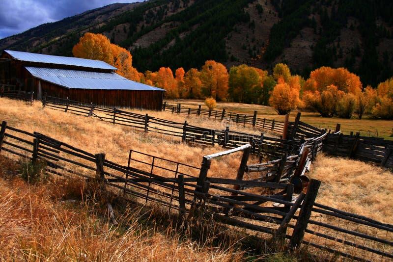 osiki stodoły jesienią fotografia stock