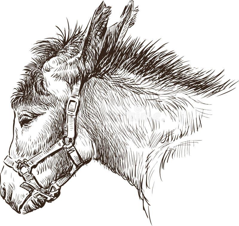 Osioł głowa ilustracji