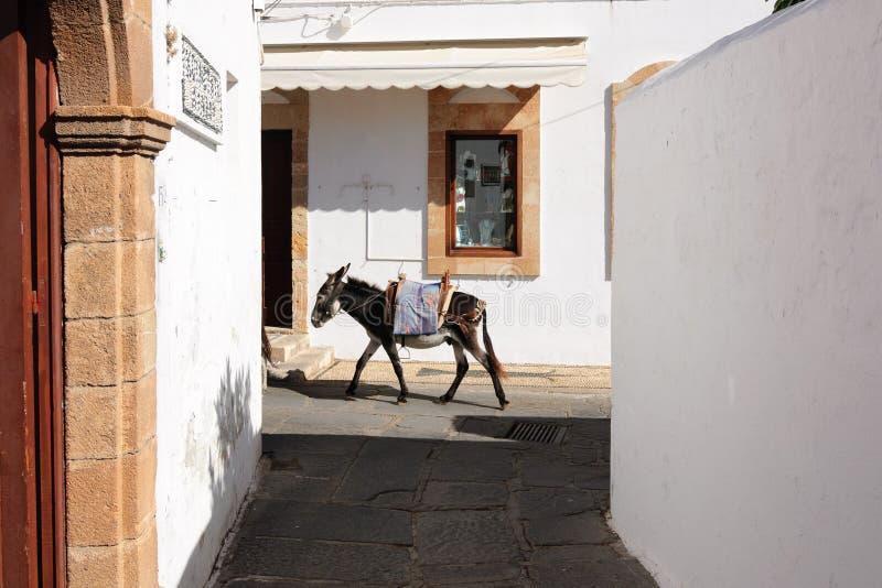 Osioł jest jedynymi sposobami transport na ulicach Lindos, Grecja fotografia stock