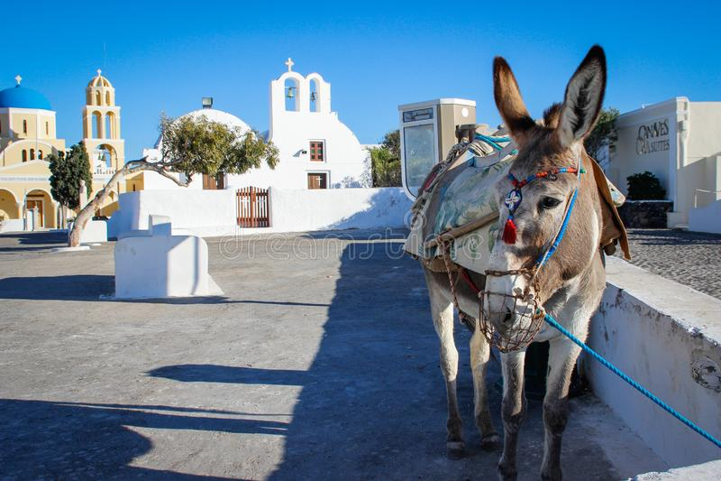 Osioł na tle Oia ulica na wyspie Santorini zdjęcie stock