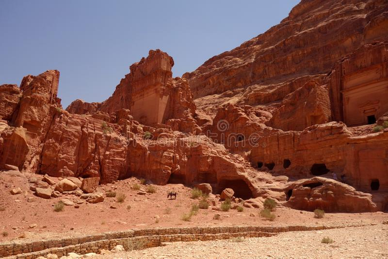 Osioł w Petra Jordania obrazy royalty free