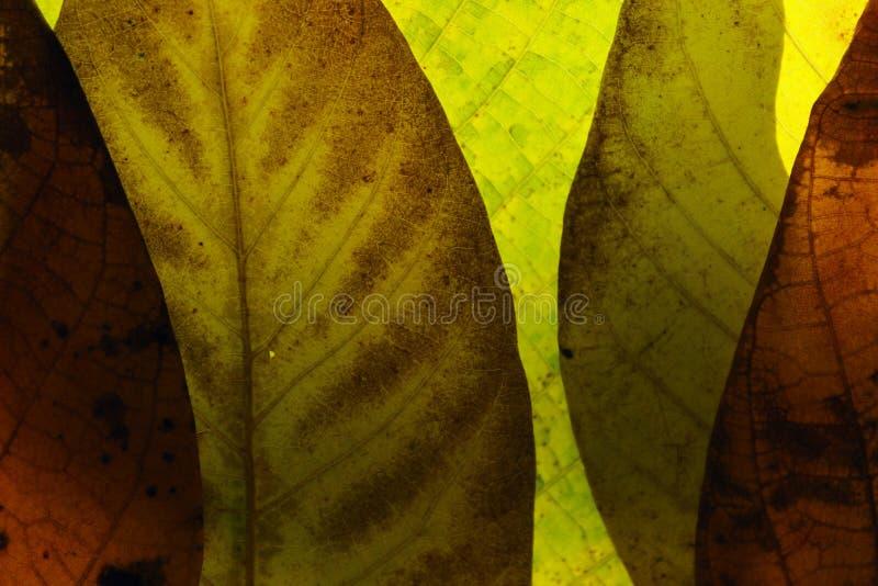 Oskarp naturlig bakgrund Beskärning av hösten lämnar textur, oskarp bild Mjuk naturbakgrund royaltyfri foto