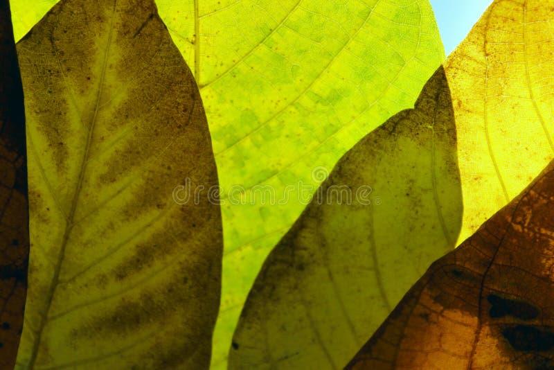 Oskarp naturlig bakgrund Beskärning av hösten lämnar textur, oskarp bild Mjuk naturbakgrund royaltyfri bild