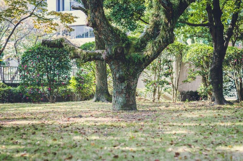 Oskarpt av trädet i trädgården, Japan arkivbilder