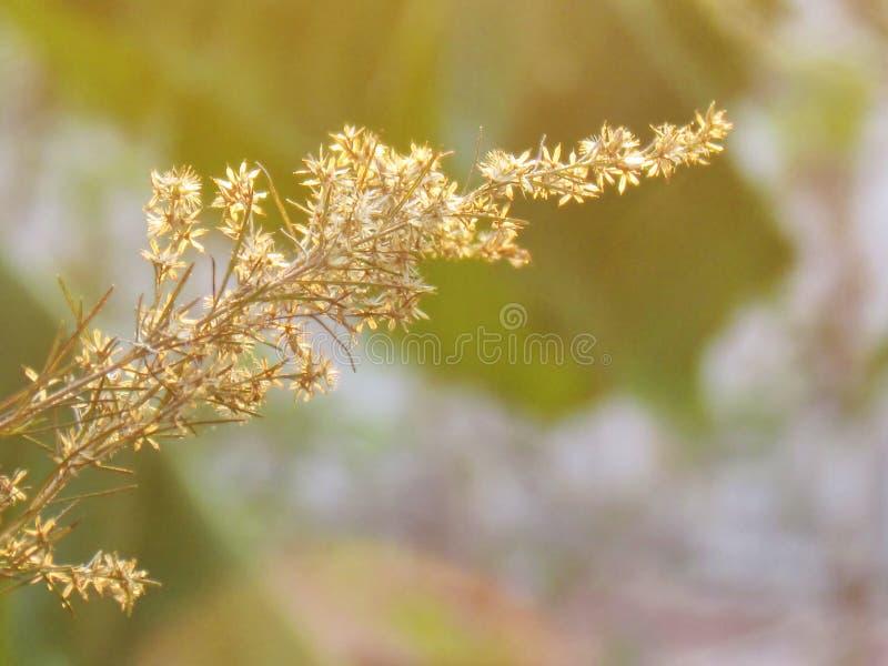 Oskarpt och softness av den torra blomman med mjukt solljus arkivbild