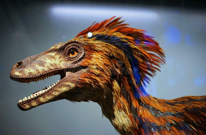 Oskrzydlony dinosaura ptak zdjęcie royalty free