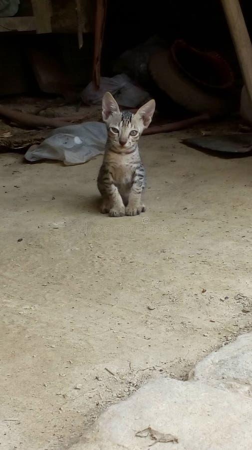 Oskyldigt kattungesökande arkivfoton