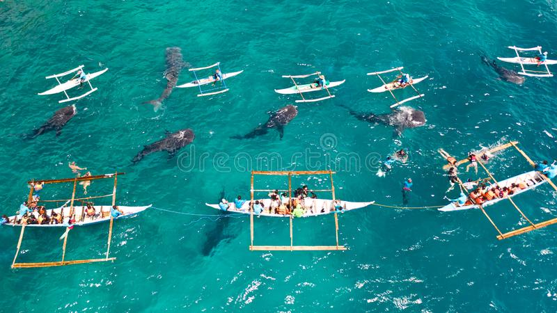 Oslob Whale Shark Watching in Philippines, Cebu Island. People snorkeling and and watch whale sharks from above. Tourists are watching whale sharks in the town stock images