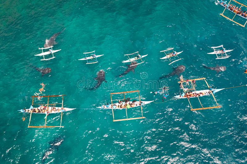 Oslob Whale Shark Watching in Philippines, Cebu Island. People snorkeling and and watch whale sharks from above. Tourists are watching whale sharks in the town royalty free stock photos