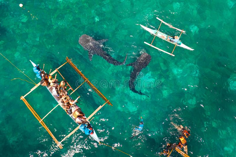 Oslob Whale Shark Watching in Philippines, Cebu Island. Tourists are watching whale sharks. Place for diving and snorkeling and watching the whale shark, top royalty free stock photography