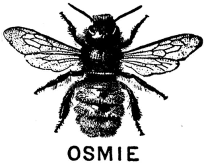 Osmie-oa Free Public Domain Cc0 Image