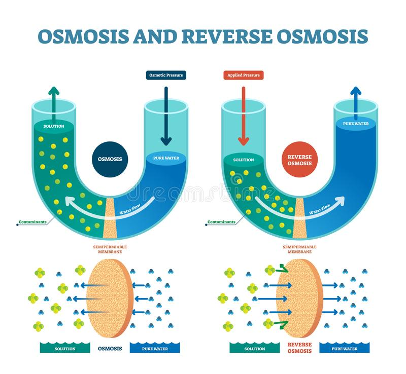 Osmosis reverse vector illustration. Explained process with solution. Osmosis reverse vector illustration. Explained process with water example. Pressure, flow stock illustration