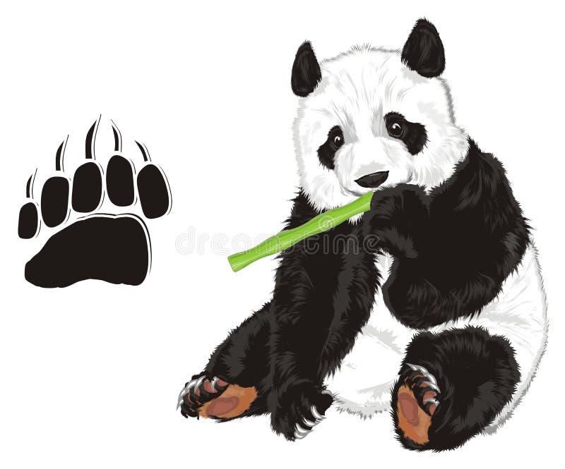 Oso con el bambú y la huella ilustración del vector