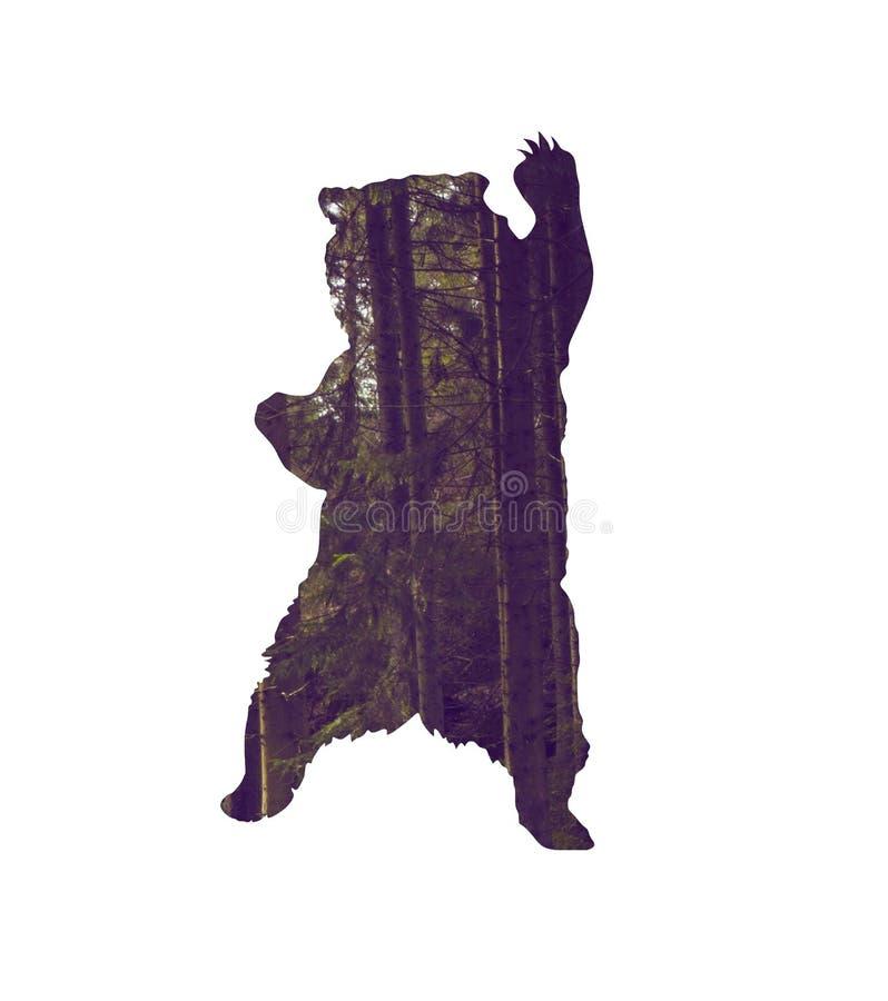 Oso con el bosque del pino dentro de la silueta stock de ilustración