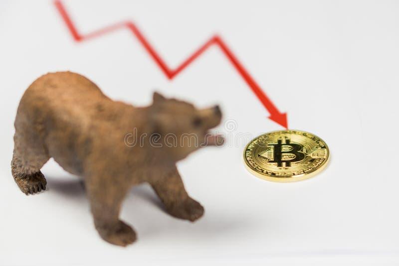 Oso con el oro Bitcoin Cryptocurrency y el gráfico rojo Concepto financiero de Wall Street del mercado bajista fotografía de archivo libre de regalías