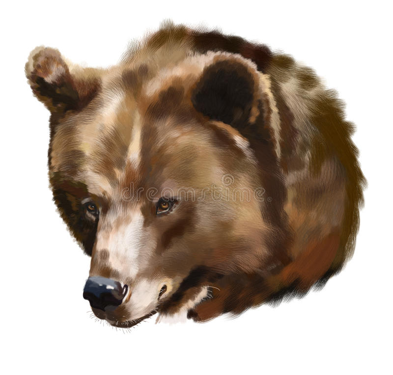 Oso de Brown stock de ilustración