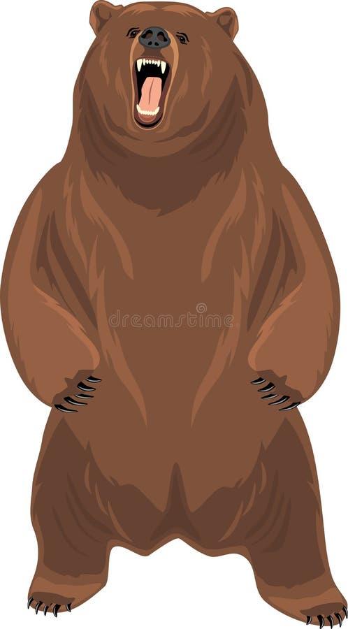 Oso de Grizzley que forrajea para la comida ilustración del vector