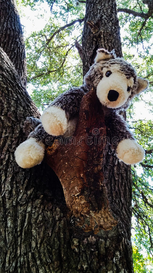 Oso de Hugga del árbol que abraza un árbol foto de archivo libre de regalías