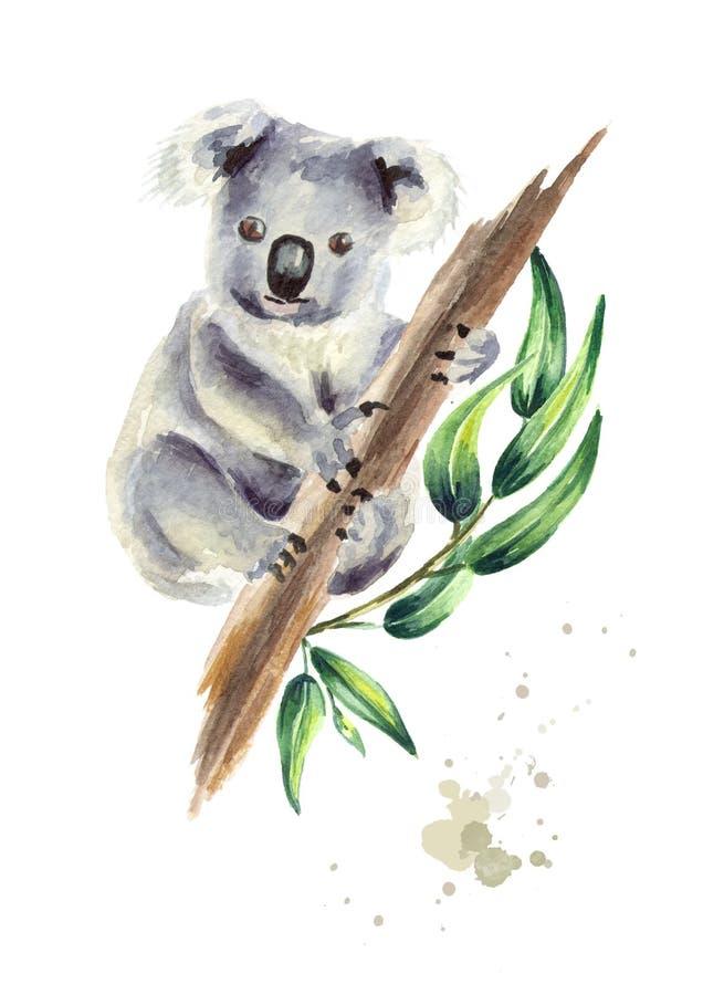 Oso de koala que se sienta en la rama del eucalipto, aislada en el fondo blanco Ejemplo dibujado mano de la acuarela libre illustration
