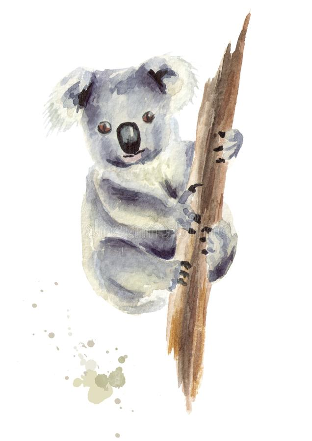 Oso de koala que se sienta en una rama de árbol, aislada en el fondo blanco Ejemplo dibujado mano de la acuarela stock de ilustración