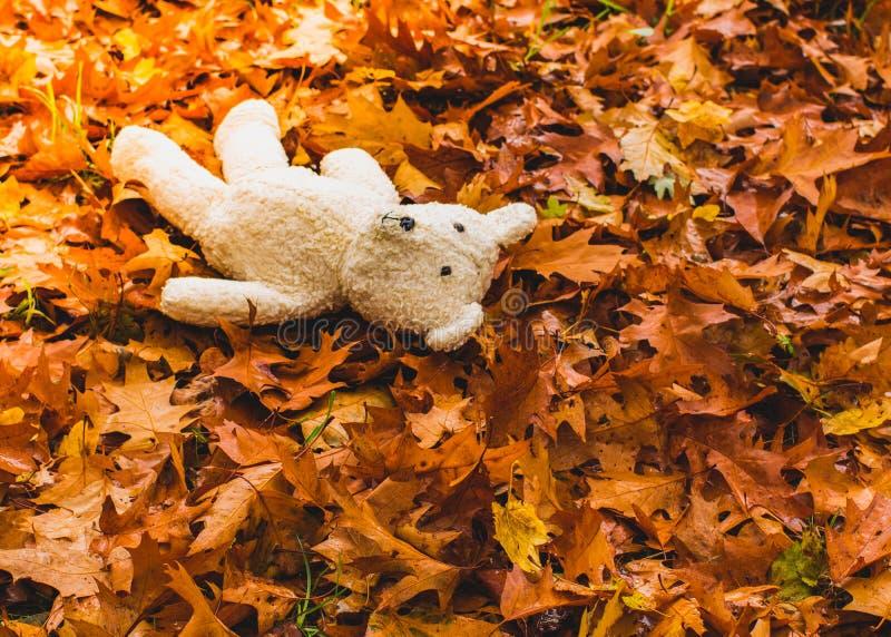 Oso de peluche blanco perdido en hojas de un otoño secas imagen de archivo