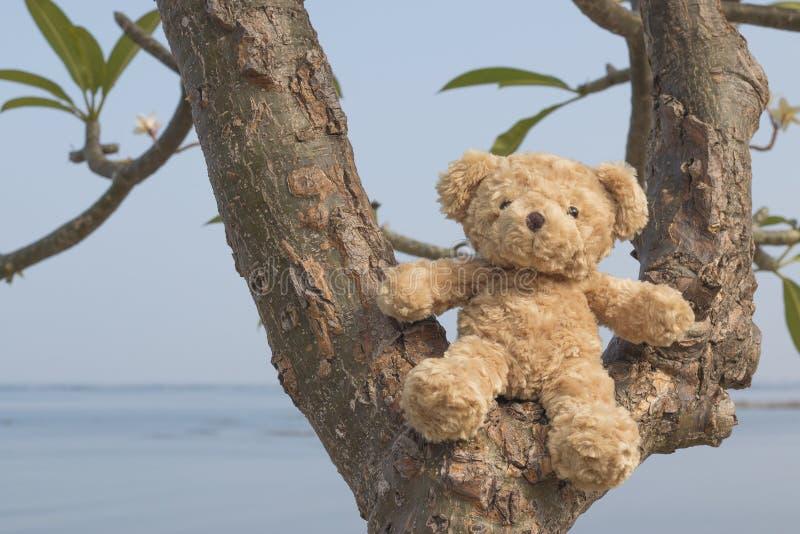 Oso de peluche que se sienta en el árbol imagenes de archivo