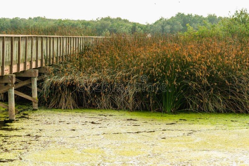 Oso Flaco湖,夏令时 从横渡在Oso Flaco湖以巨大看法和鸟的监视人的机会的桥梁的看法 Os 库存图片