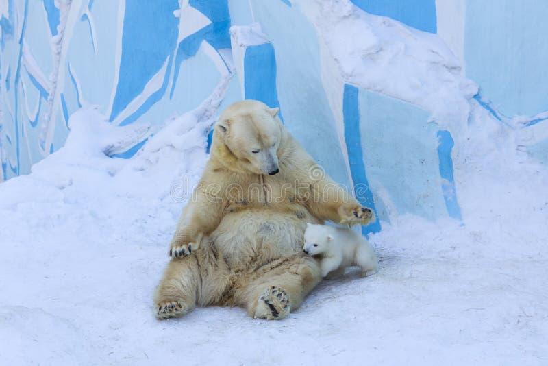 Oso polar con el cachorro Amor de madre fotografía de archivo libre de regalías