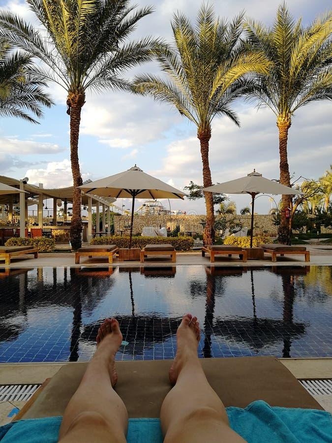 Osoba kłama na sunbed, wokoło drzewka palmowego, basenu i słońca, wakacje i odpoczynku widoczne nogi obraz stock