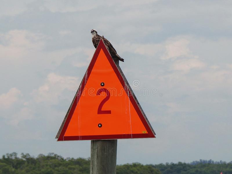 Osprey on boat speed limit sign stock images