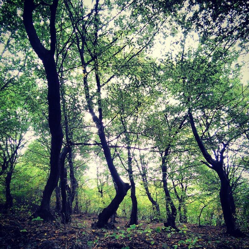 oss Wald stockfoto
