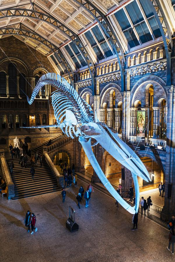 Ossa di dinosauro enormi al Central Hall, museo di storia naturale fotografie stock
