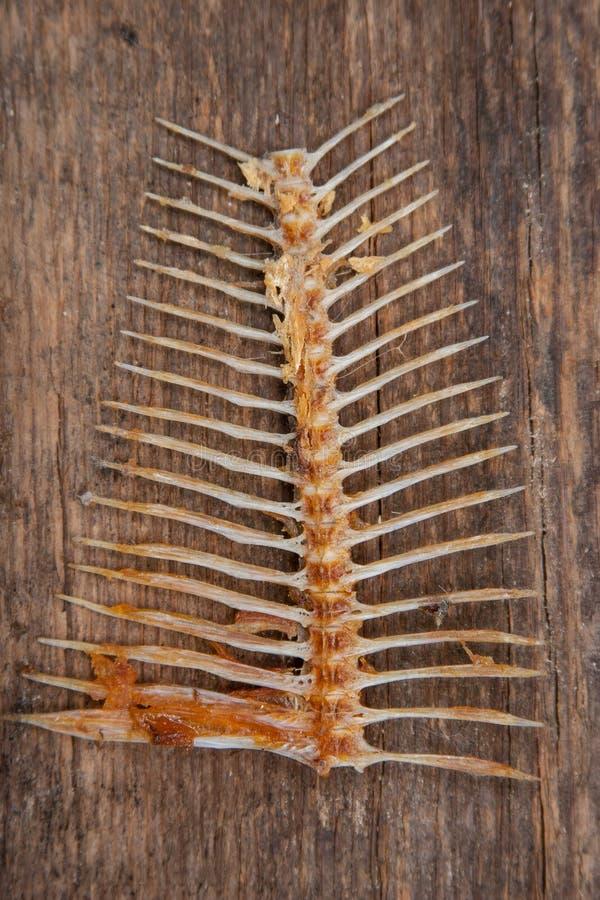 Ossa di pesce su legno fotografia stock