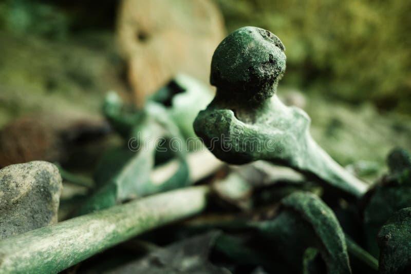 ossa umane di resti accatastate su in una caverna come segno di rispetto del capo morto del villaggio immagini stock