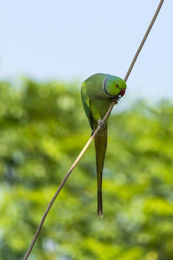 Ossequi aspettanti di un pappagallo allegro immagini stock