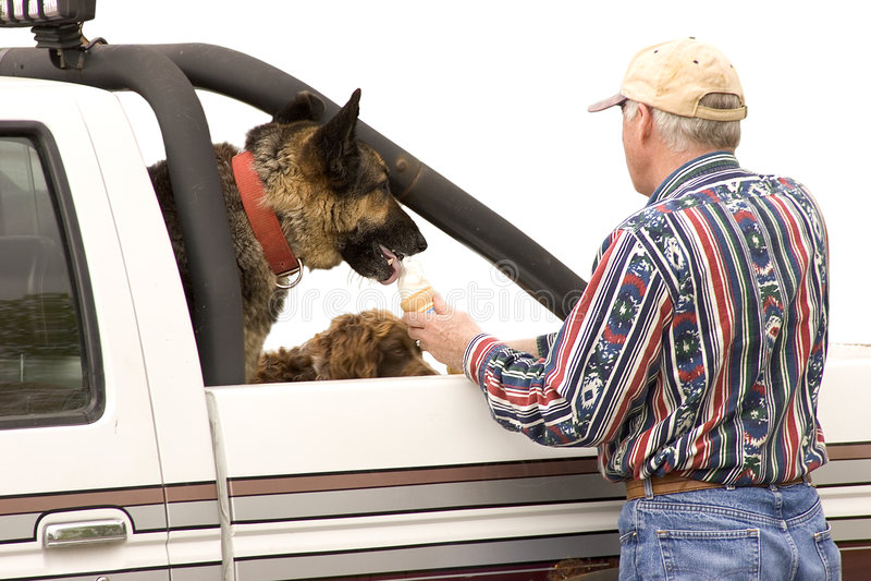 Ossequio del cane immagini stock libere da diritti