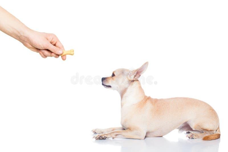 Ossequio del cane fotografia stock