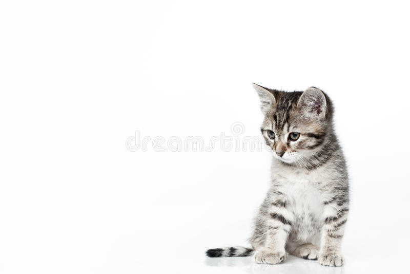 Osservando giù il gattino immagine stock libera da diritti