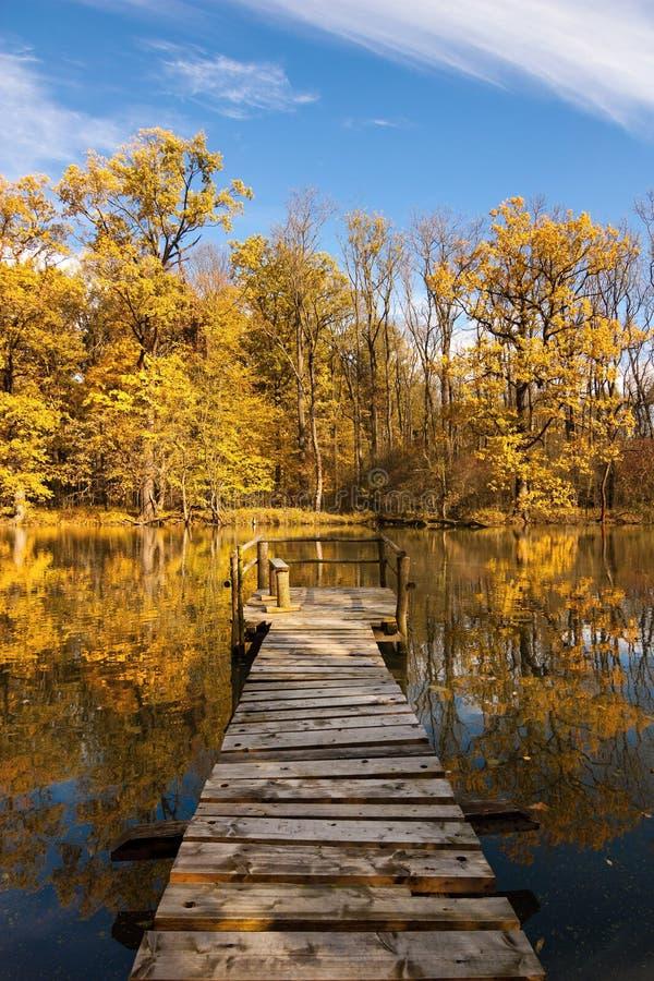 Osservi da Yetty la foresta di autunno fotografie stock libere da diritti