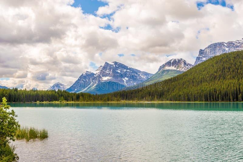 Osservi nel lago waterfowl nel parco nazionale di Banff - il canadese Rocky Mountains immagine stock