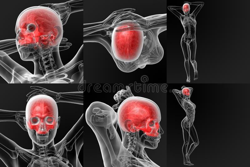 osso del cranio - metà superiore illustrazione vettoriale