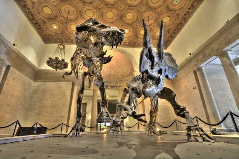 Ossos de dinossauro fotografia de stock
