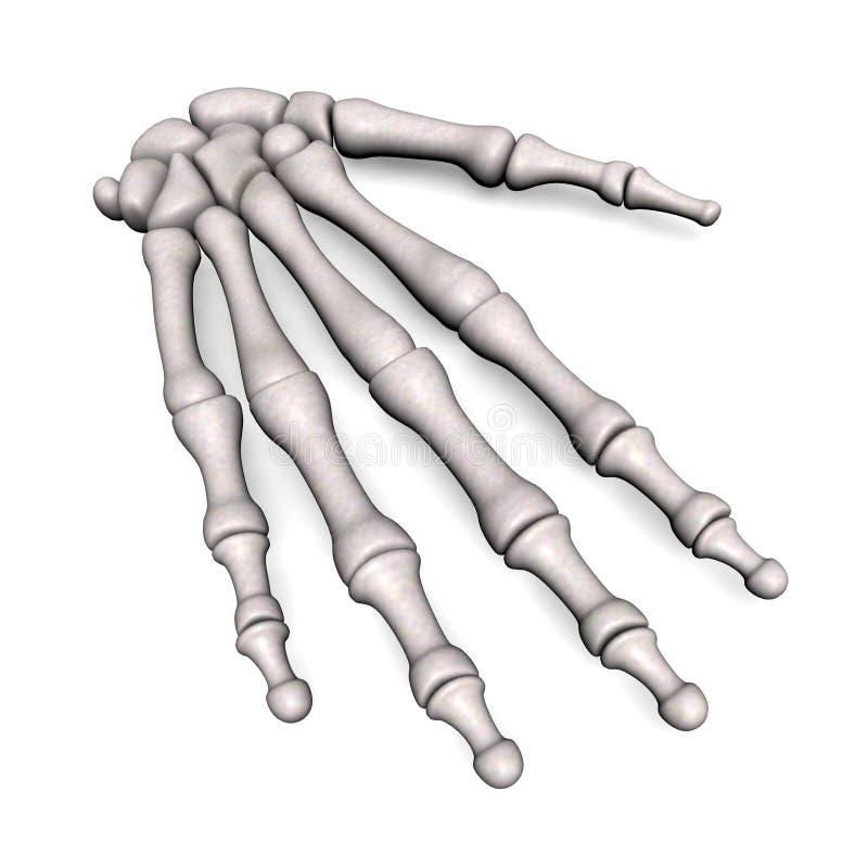 Ossos de mão ilustração do vetor