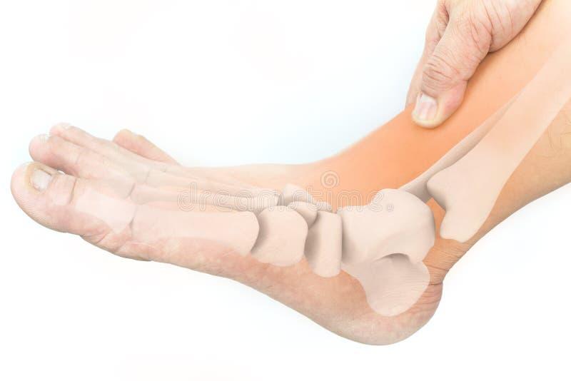 Ossos de pé imagem de stock