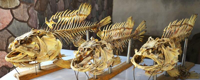 Ossos de peixes foto de stock royalty free