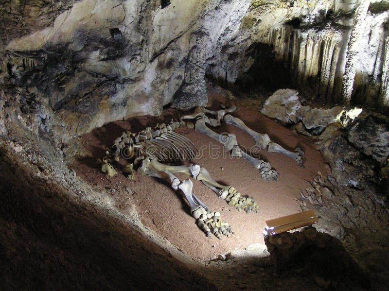 Ossos de um mammoth. imagens de stock royalty free