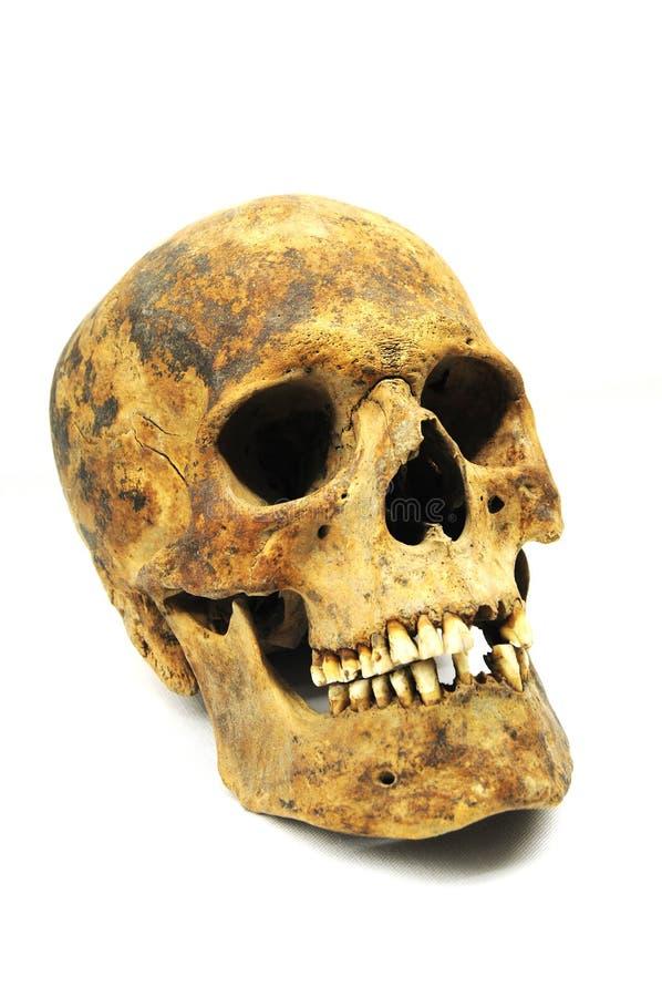 Ossos do crânio da idade Neolithic imagens de stock