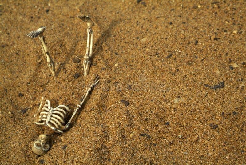 Ossos do esqueleto de Halloween foto de stock royalty free