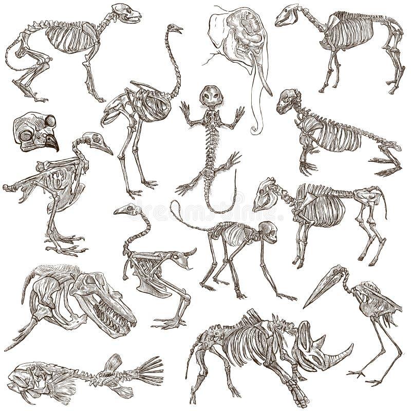 Ossos e crânios de animais diferentes - freehands ilustração royalty free