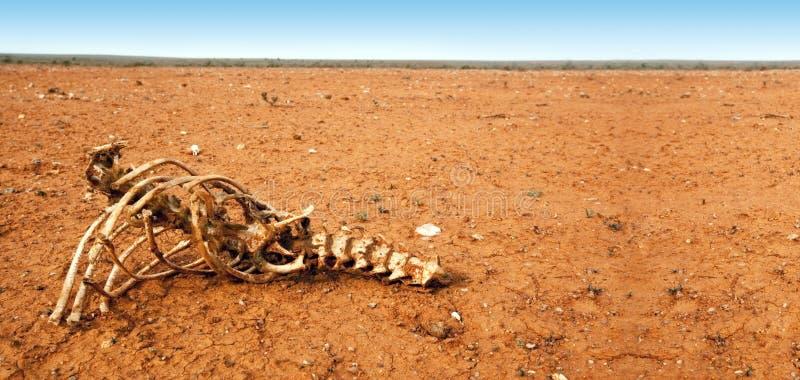 Ossos no deserto imagem de stock royalty free